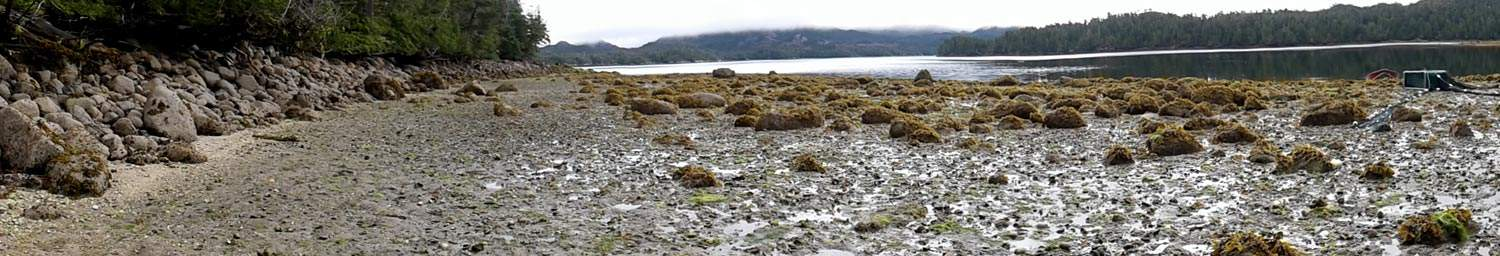 Calvert Island clam garden; Nuxi. Hakai Research Institute