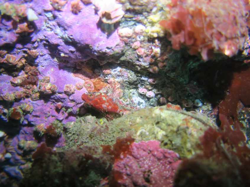 Beautiful and colorful biodiversity while SCUBA diving